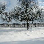 Tuin_in_de_winter2